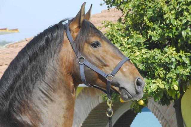 Cavalli Yeguada Effatà RS, Località Piano 1, Fianello Montebuono (Rieti)